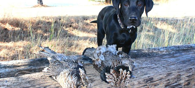 10 Hunting Dogs You Have To See!