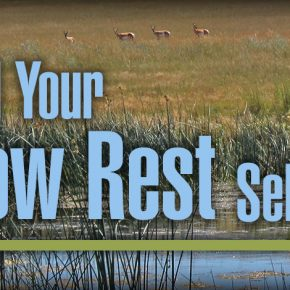 Archery Equipment: Expand Your Arrow Rest Selection